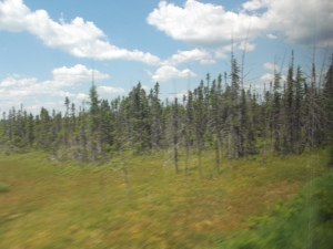 There is a lot of forest in New Brunswick.  My father might have called this 'moose pasture'.  I didn't see any this time.