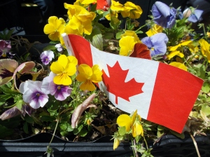 On Spring Garden Road in downtown Halifax,  pretty planters were adorned with flags for Canada Day.