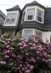 I love the wooden homes with bay windows.  The Halifax climate must be ideal for Rhododendrons!