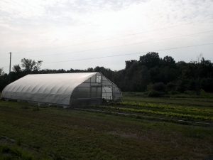 The green house shelters special produce such as gigantic egg plants.  I've never seen any that big! (sorry -did not have camera with me to capture them)