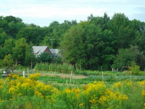 The Freedom Farm is situated near the Three Little Cottages, and the home of proprietors Sharon and Will Freeman.