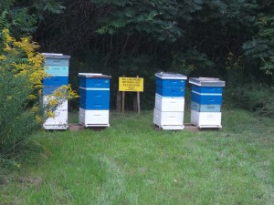 Bees happily buzzed around these hives on the Freedom Farm. They certainly had fields of plenty to make great honey!